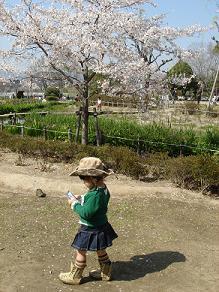 昆陽池公園 桜花見
