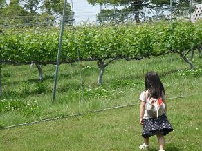 神戸ワイナリー バーベキュー ピクニック ワイン