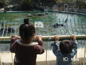 天王寺動物園 動物園 ピクニック