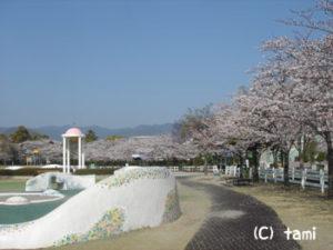 阪神競馬場 お花見 桜花見