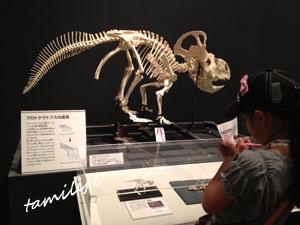 モンゴル恐竜化石展 大阪市立自然史博物館 博物館