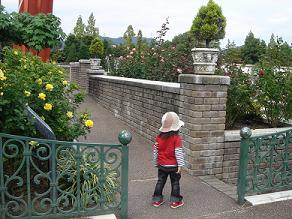 荒牧バラ公園 バラ花見