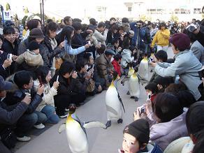 雪遊び ペンギンパレード 海遊館 水族館
