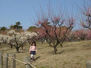 緑ヶ丘公園 梅花見