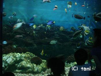 須磨海浜水族園 水族館
