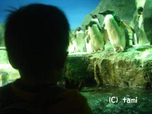 海遊館 水族館 ペンギン