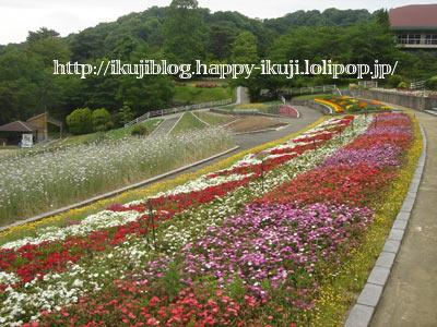 和歌山県植物公園緑化センター ピクニック 花見