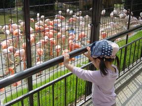 神戸市立王子動物園 フラミンゴ