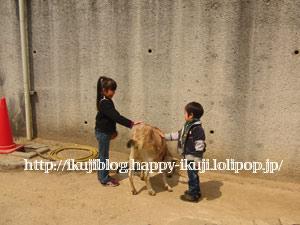神戸市立王子動物園 動物触れ合い
