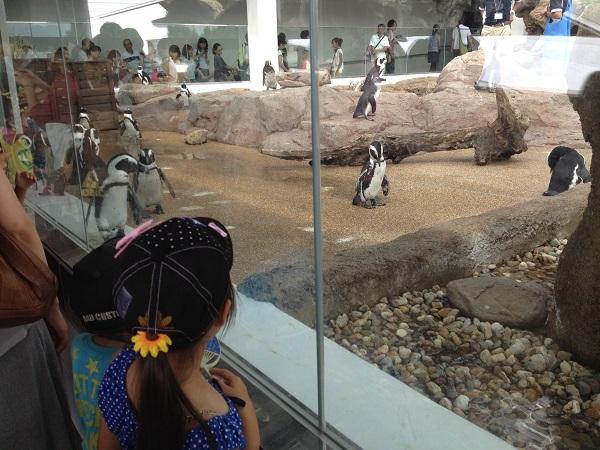 京都水族館 夏休み 水族館 イルカショー ペンギン