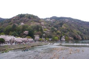 嵐山桜 桜名所 桜花見