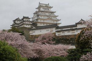 姫路城 桜名所 桜花見
