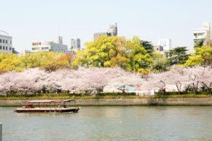 毛馬桜ノ宮公園 桜花見 桜名所