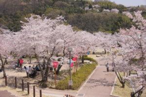 摂津峡公園 桜花見 桜名所