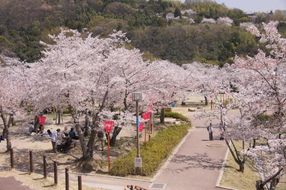 摂津峡公園 桜花見 桜名所 さくらまつり