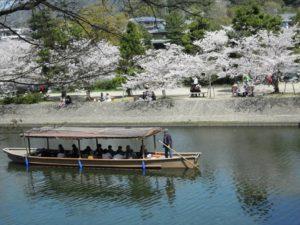 万博記念公園 桜名所 桜花見