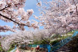 須磨浦山上遊園 桜名所 桜花見