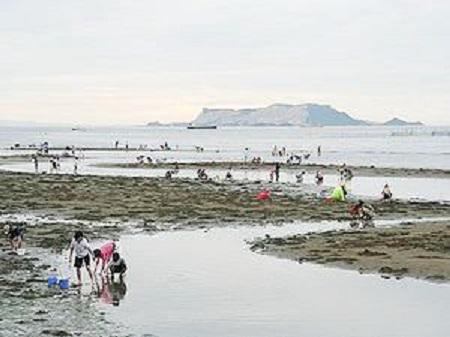 新舞子海水浴場 潮干狩り