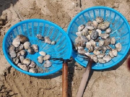 淡輪ときめきビーチ 潮干狩り