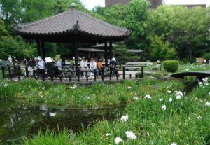 城北公園花菖蒲園