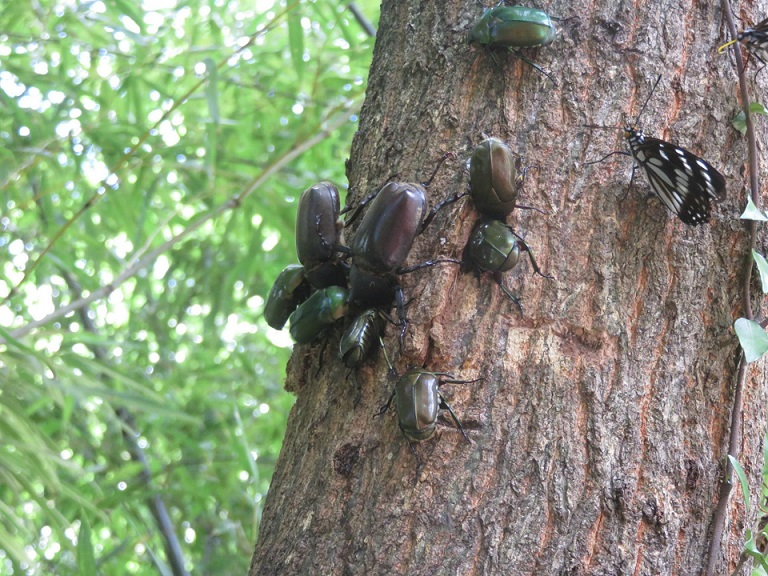 神戸森林植物園 昆虫採集