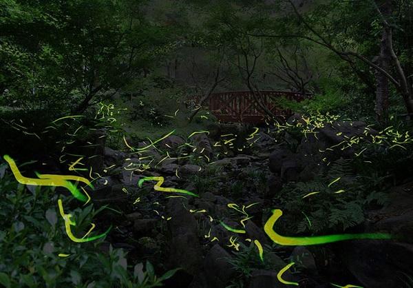 梅田スカイビル 中自然の森に蛍舞う ホタル観賞