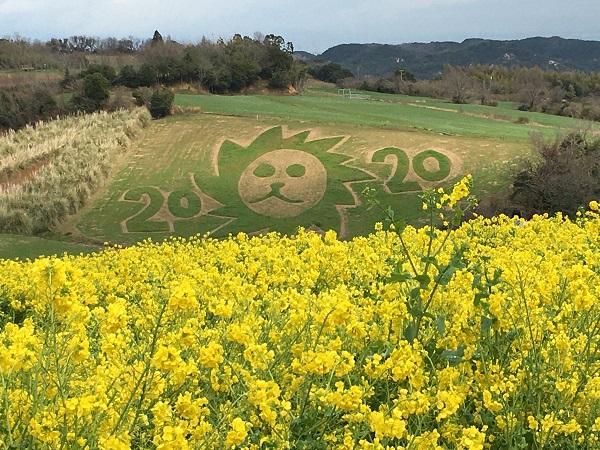 淡路花さじき 菜の花花見