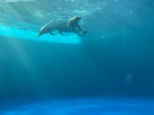 香川旅行 四国水族館